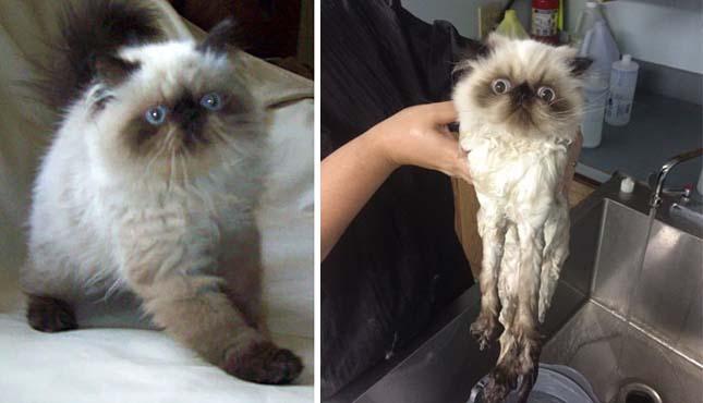 Álltok fürdetés előtt és után