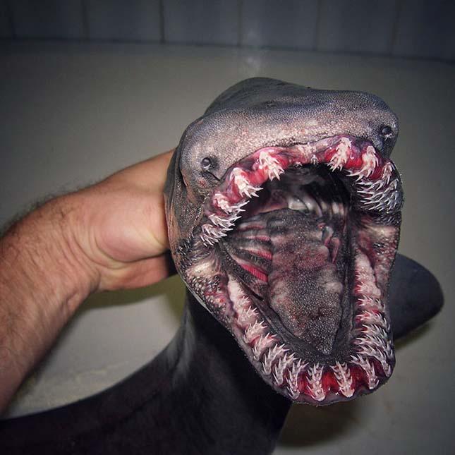 Mélytengeri élőlények