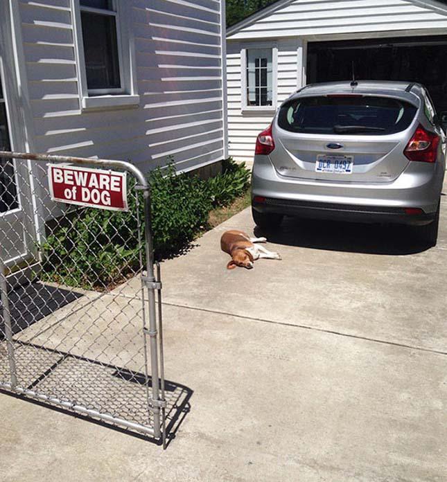 Amikor a harapós kutya tábla nem fedi a valóságot