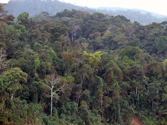 Higanyszennyezés Amazóniában
