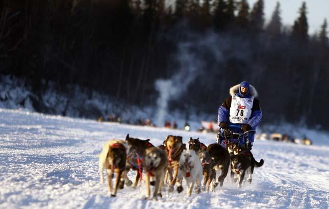 Kutyaszánverseny