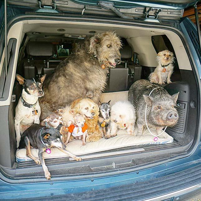 Idős kutyákat vesz magához