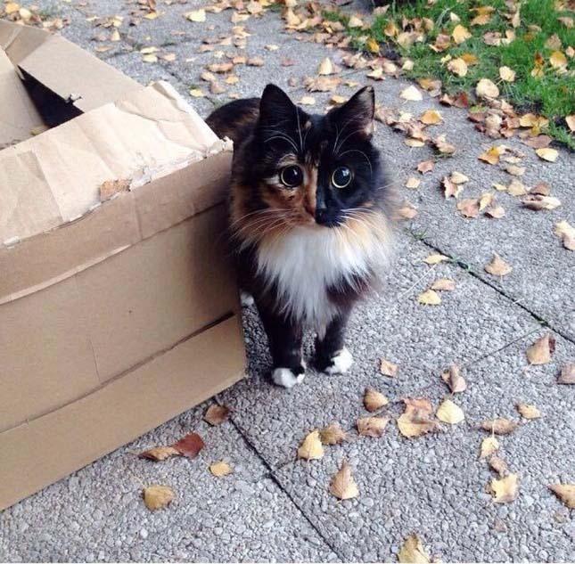 Jasmine macska