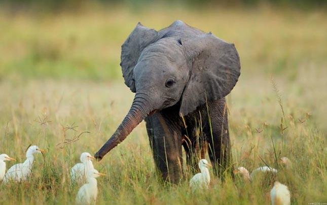 Kiselefántok akcióban