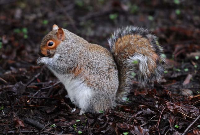 Kövér mókusok