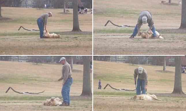 Kutya nem akar hazamenni a parkból