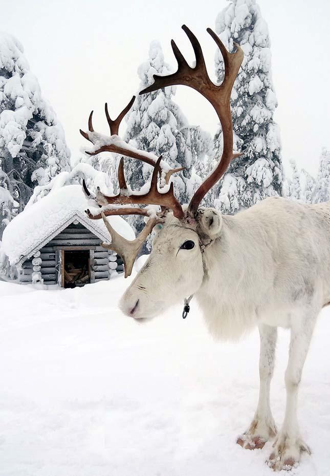 Lappföldi tél