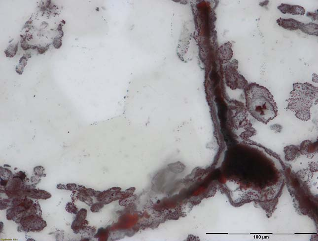 Legöregebb mikroorganizmus