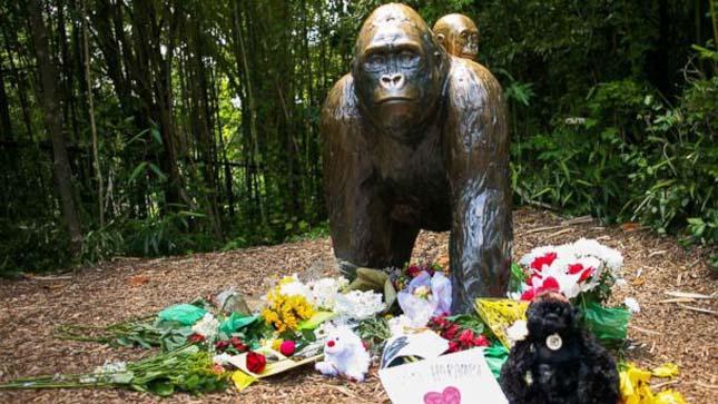 Lelőtt gorilla