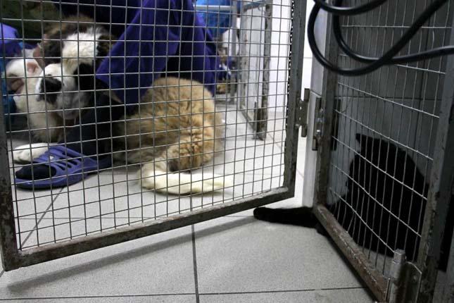 Macska ápoló