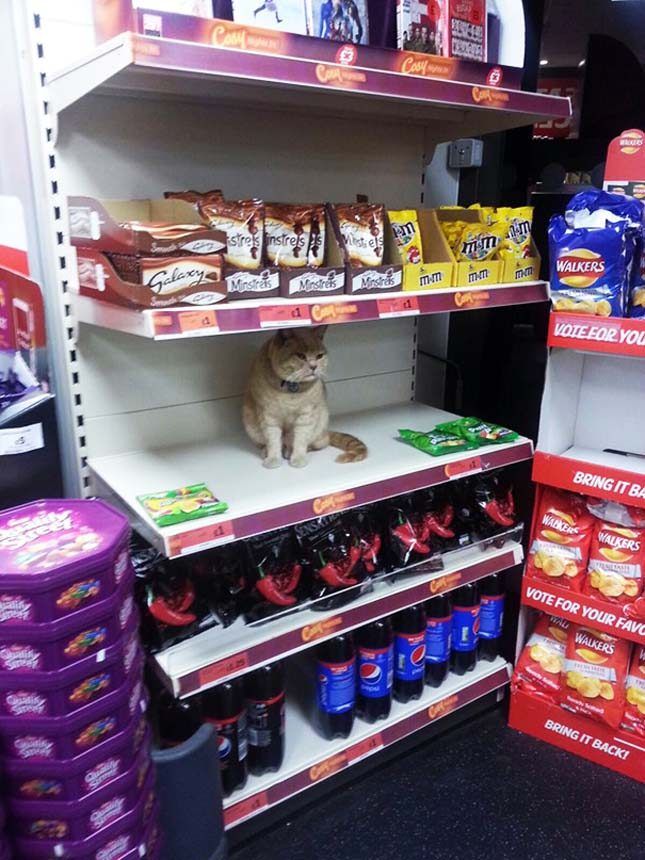 Macska a boltban