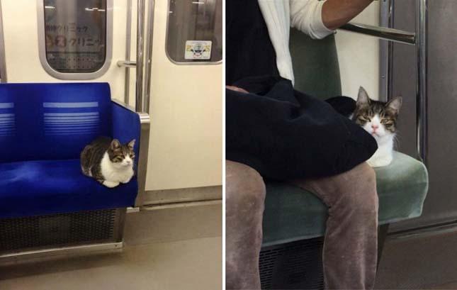 Macska a metrón