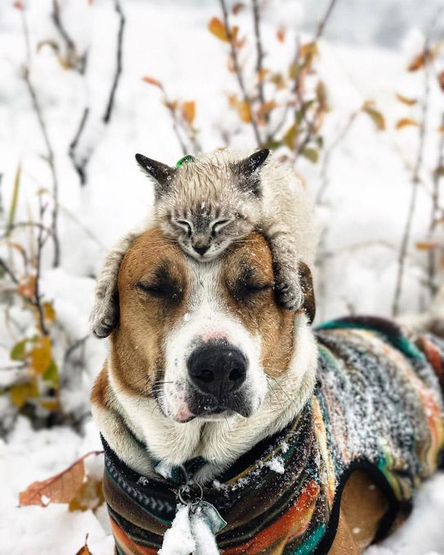 Kutya és macska együtt fedezi fel a világot