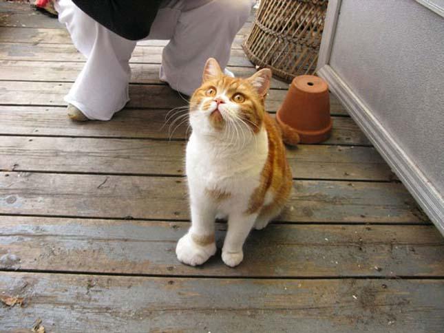 Méhcsípés áldozatául esett macskák