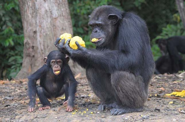 Majmok-szigete