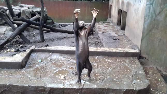 Petíció a medvék kiszabadításáért