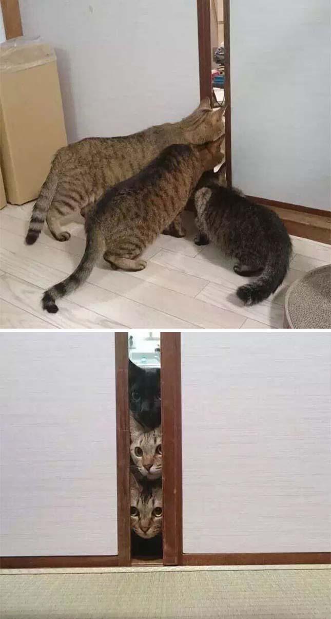 Megdöbbent állatok