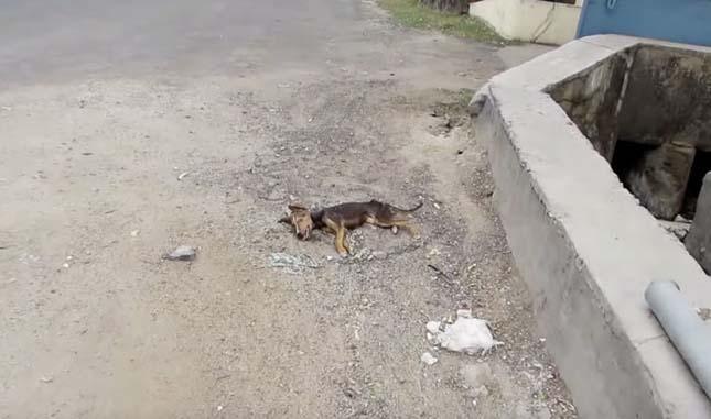 Így örült a csontsovány kiskutya mikor végre megmentőkre talált