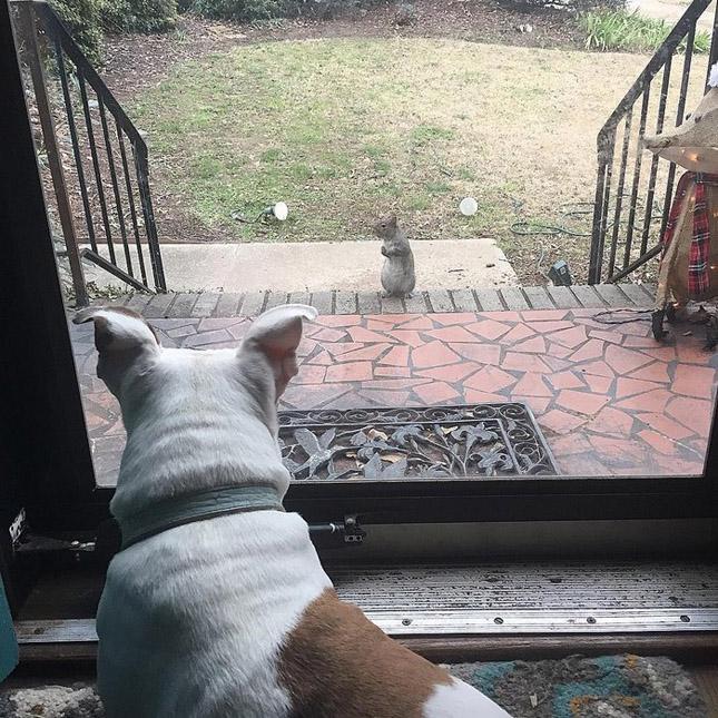Visszajár megmentőihez a mókus