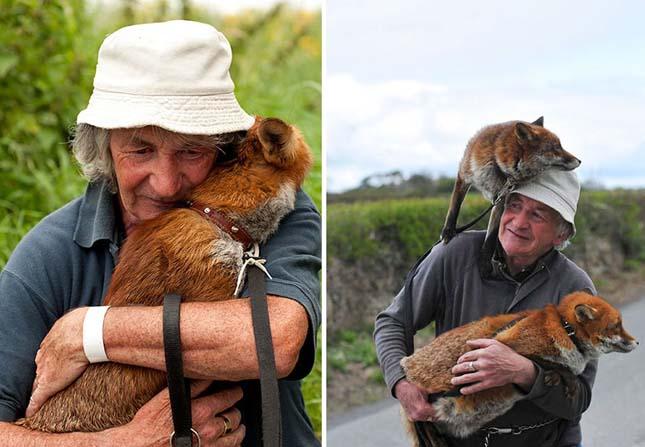 Megmentett rókák