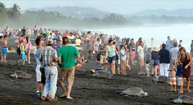 Turisták zavarták meg a teknősök tömeges fészekrakását
