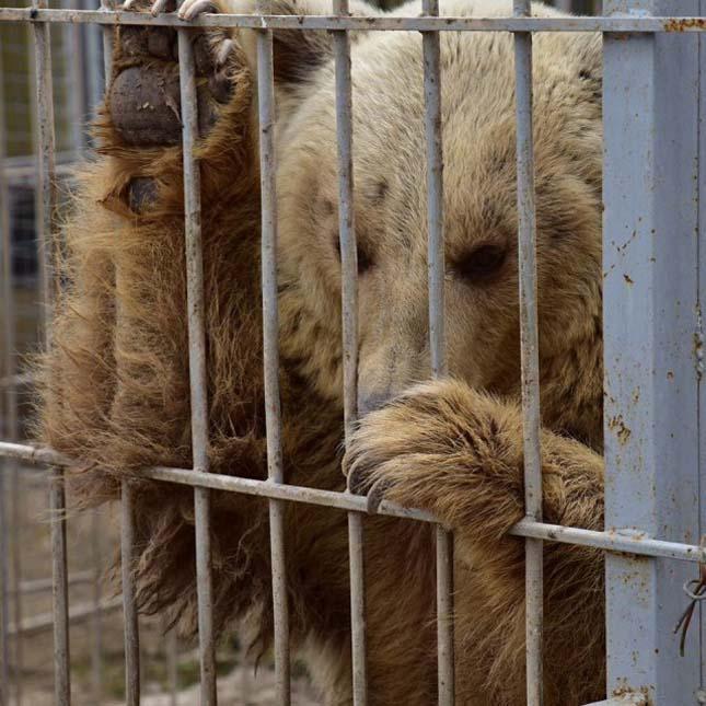 Két állat maradt életben a moszuli állatkertben