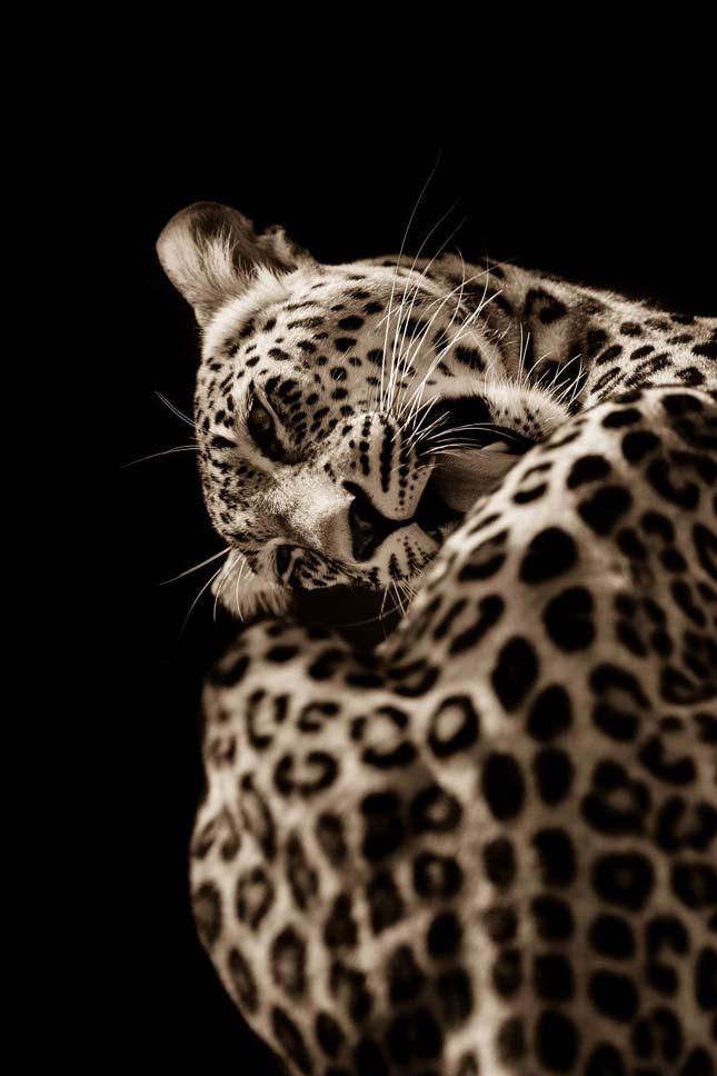 Nagymacskák-Goran Anastasovski fotói