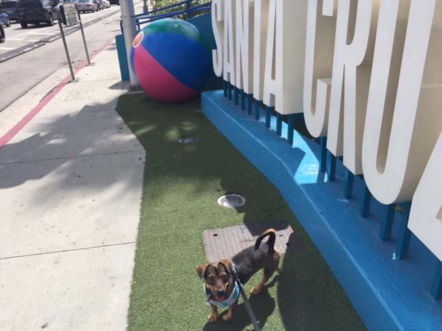 Örökbe fogadott kutya