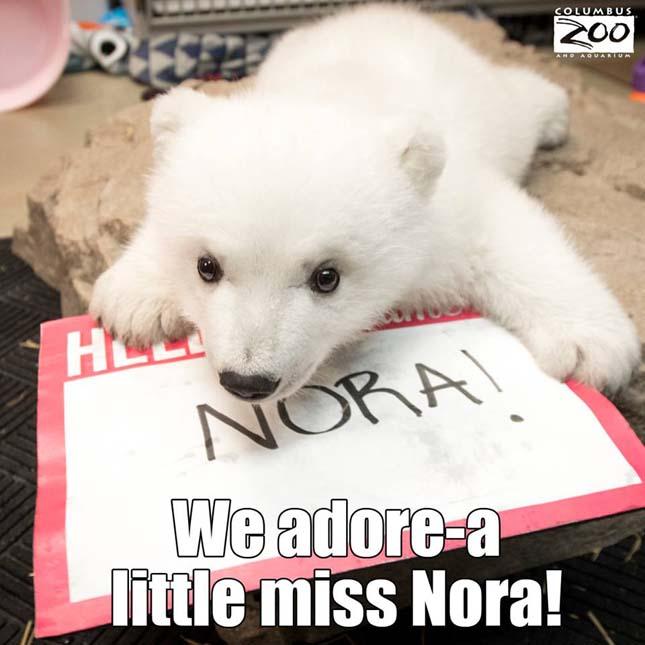 Nora a jegesmedvebocs