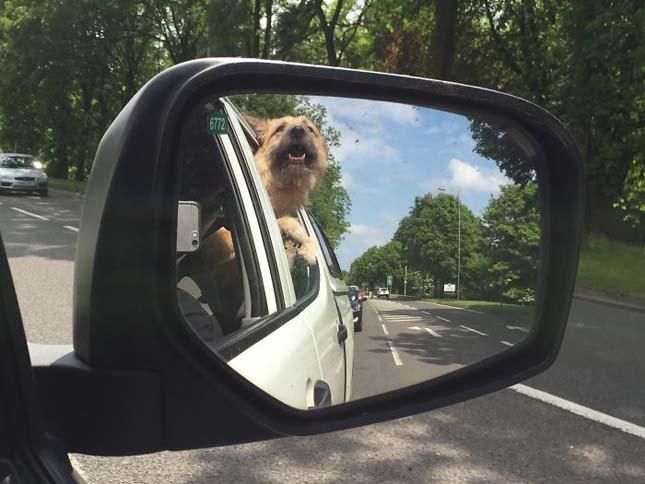 Kutyák az örökbe fogadásuk napján