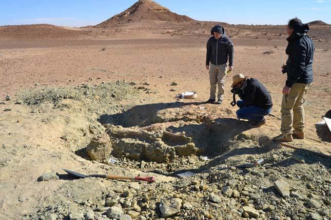 A valahal élt legnagyobb krokodil koponyáját találták meg Tunéziában