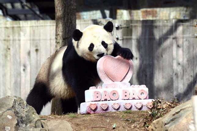 Pao Pao panda
