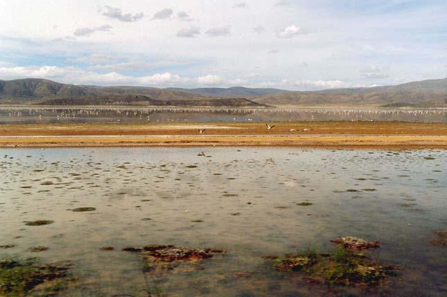 Poopó-tó