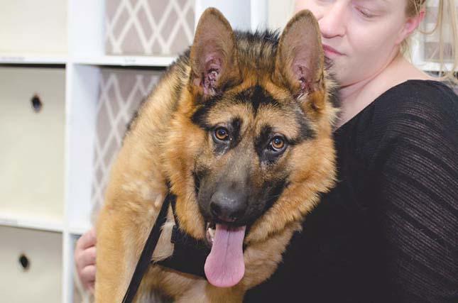 Quasimodo kutya