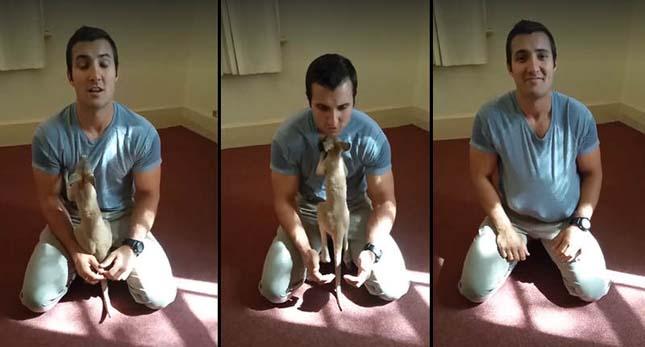 Megmentett kenguru