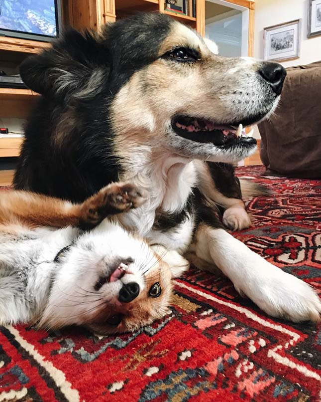 Róka és kutya barátsága