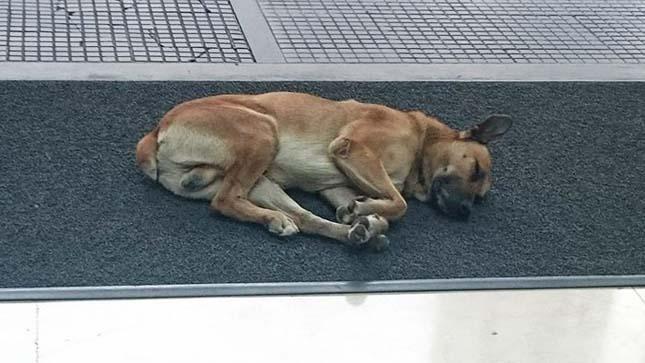 Rubio kutya