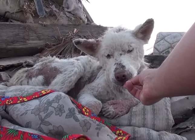 Szeméttelepen élt a kutya