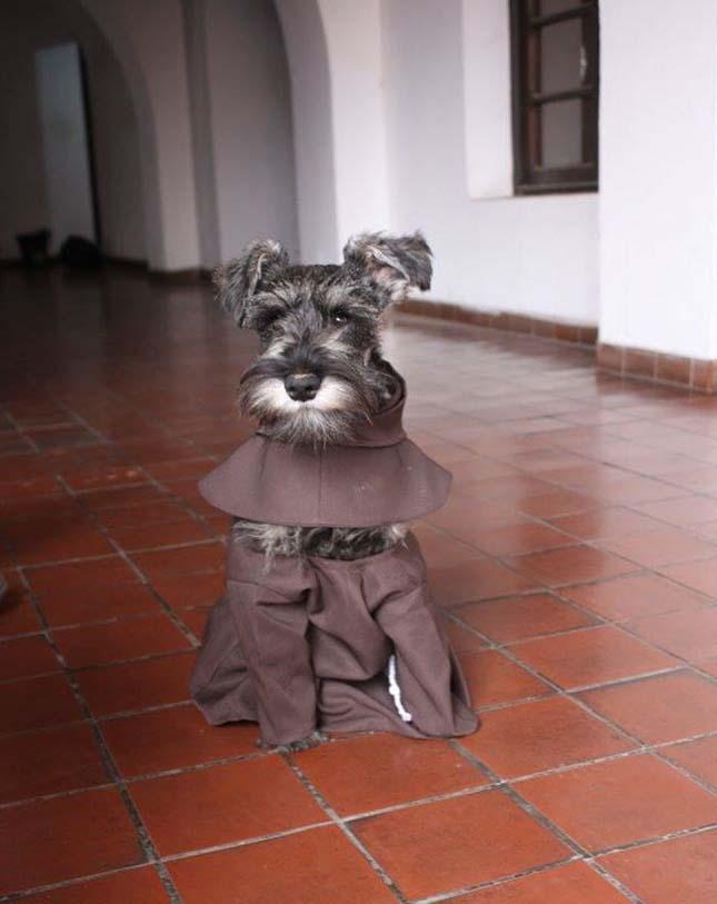 Szerzetesek fogadták be a kóbor kutyát