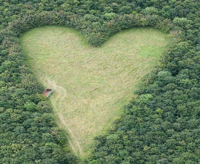 Szív erdő