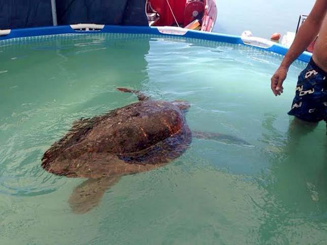 Majdnem meghalt a teknős a turisták miatt