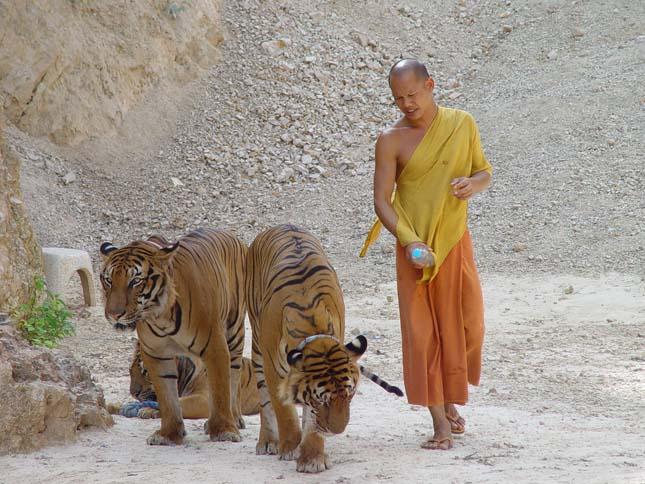 Tigris Templom