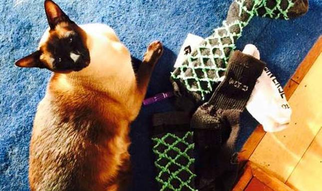 Zoknikat és alsónadrágokat lop egy macska