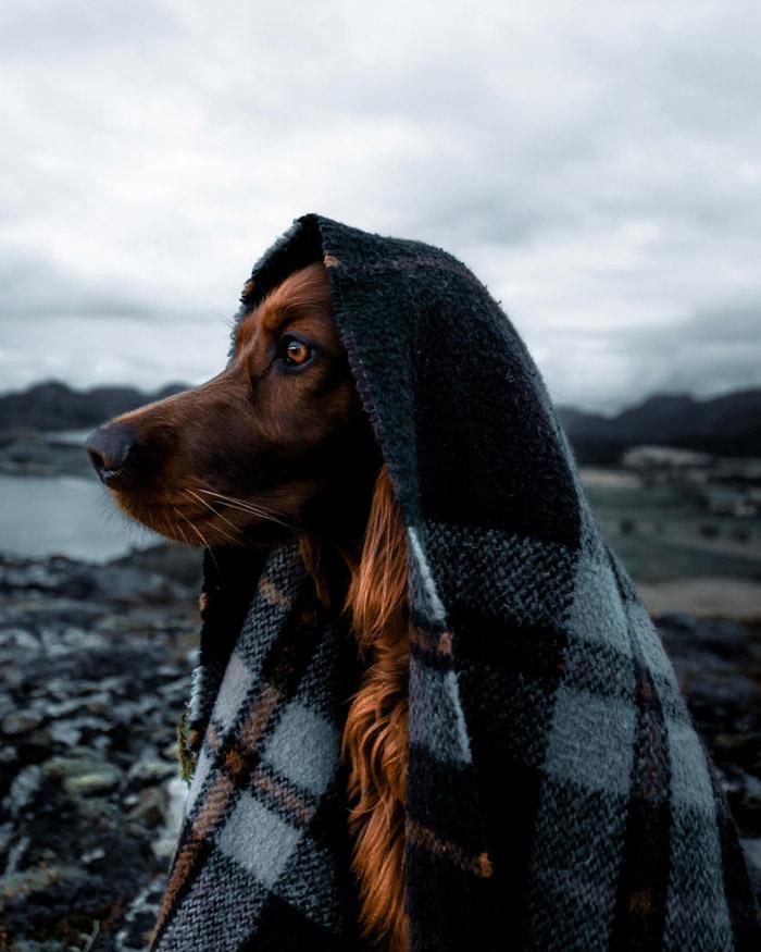 Kutyájával fedezi fel Norvégia vadregényes tájait