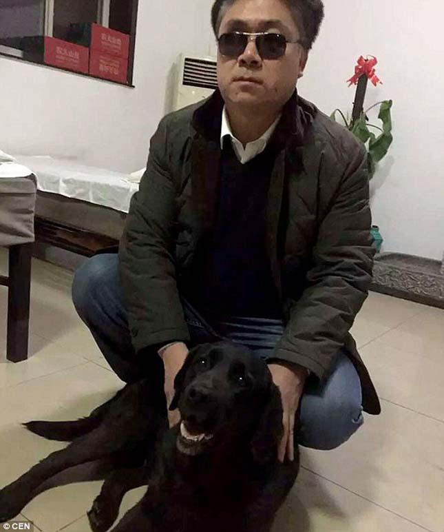 Ellopott vakvezető kutya