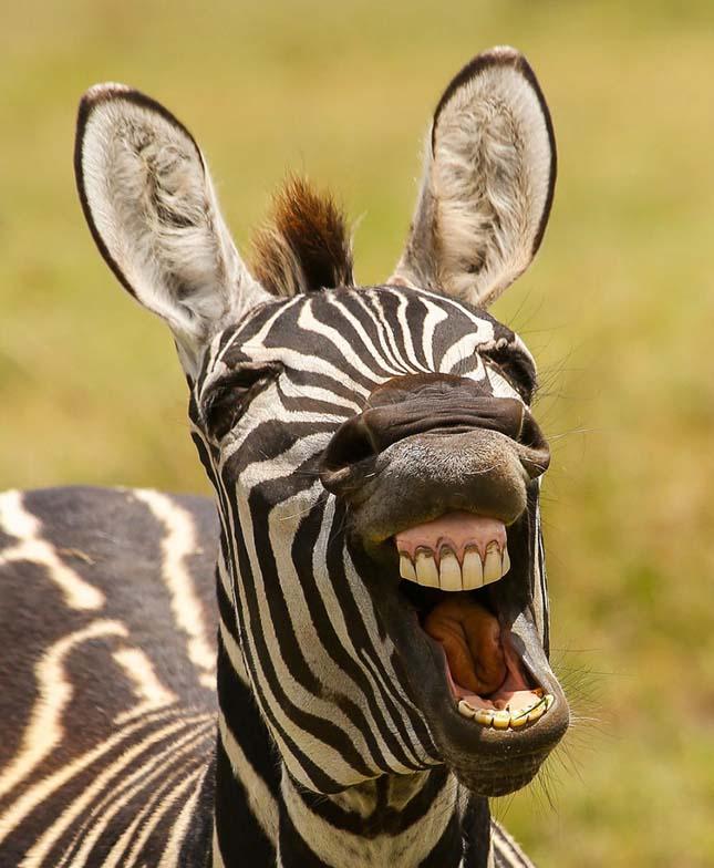 Vicces állatfotók