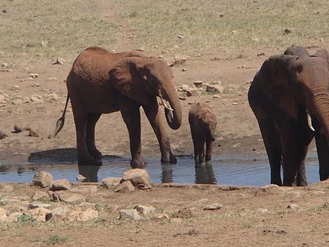 Mindennap vizet szállít a szomjas vadállatoknak