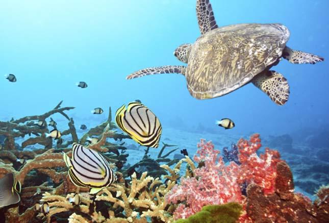Maldives coral and fish