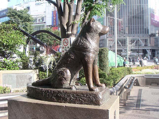 Hachiko, a hűséges kutya