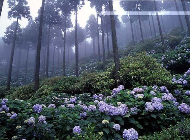 Japán erdő.